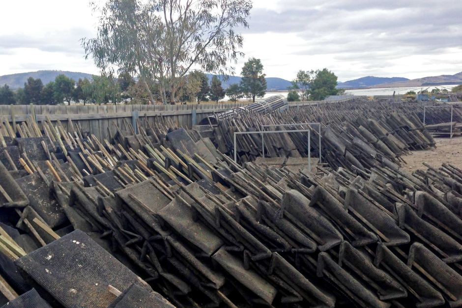 Stockpiled oyster baskets. Image: Jacqui Street, ABC NEWS