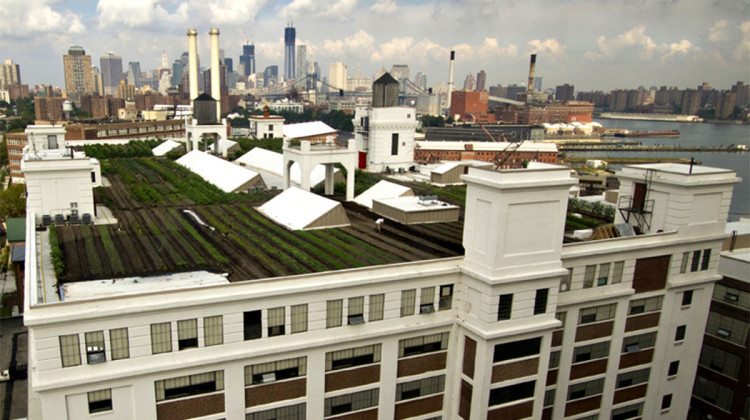 Time-lapse: first season of world's biggest rooftop farm