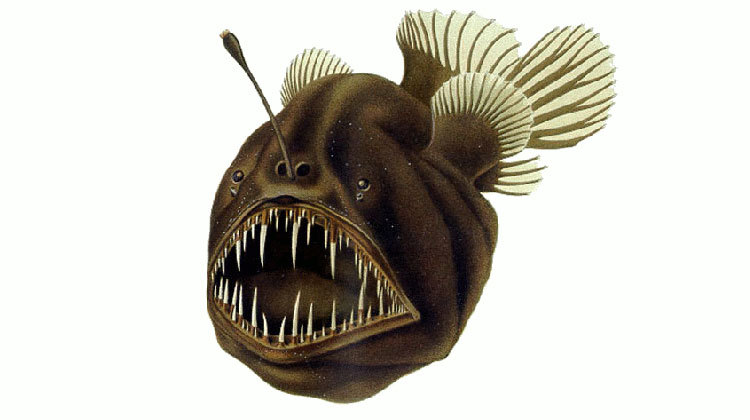 Deep-sea Anglerfish Caught On Video