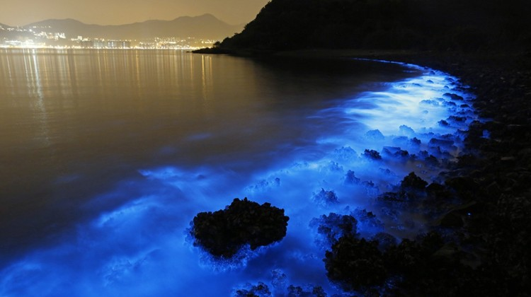 That Toxic Blue Glow: Noctiluca Scintillans